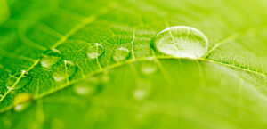 """Enel Green Power – """"Green is the only hydrogen that's truly clean"""""""